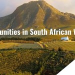 Opportunities in South African Wines
