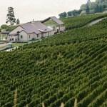 Fitzpatrick Winery (Okanagan photographer - jonadrian.com)