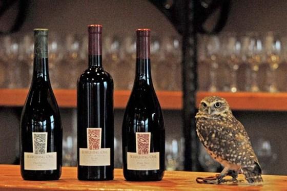 Burrowing Owl wines