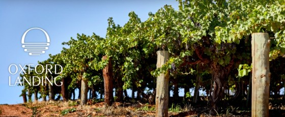 Oxford Landing vineyards (Image courtesy Oxford Landing)