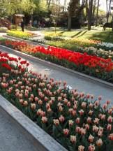 Tulipe-Mania (170)