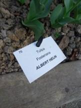 Tulipe-Mania (226)