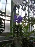 1001 Orchidées .. (11)
