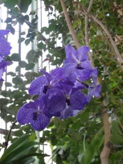 1001 Orchidées .. (12)