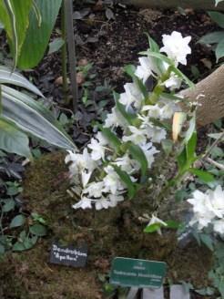 1001 Orchidées .. (13)