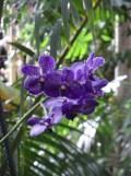 1001 Orchidées .. (27)