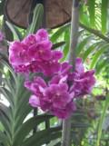 1001 Orchidées .. (28)