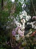1001 Orchidées .. (29)