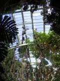 1001 Orchidées .. (49)