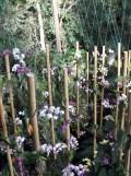 1001 Orchidées .. (54)