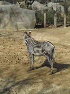 Zoo de Vincennes (105)