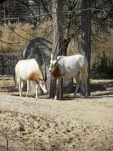 Zoo de Vincennes (139)