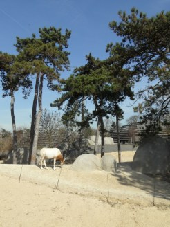 Zoo de Vincennes (145)