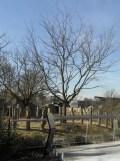 Zoo de Vincennes (146)