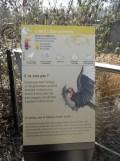 Zoo de Vincennes (154)