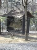 Zoo de Vincennes (16)