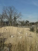 Zoo de Vincennes (163)