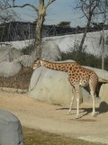 Zoo de Vincennes (179)