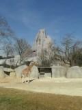 Zoo de Vincennes (186)