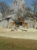 Zoo de Vincennes (193)