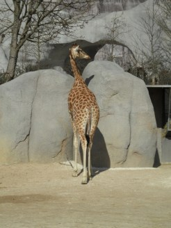 Zoo de Vincennes (196)