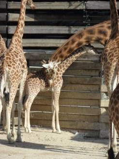 Zoo de Vincennes (209)