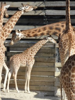 Zoo de Vincennes (210)