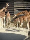 Zoo de Vincennes (212)