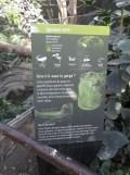 Zoo de Vincennes (245)