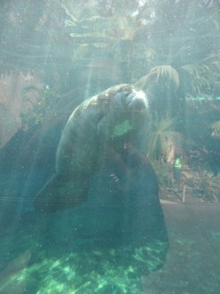 Zoo de Vincennes (275)