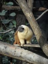 Zoo de Vincennes (282)