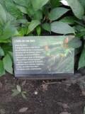 Zoo de Vincennes (284)