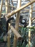 Zoo de Vincennes (299)