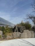 Zoo de Vincennes (309)