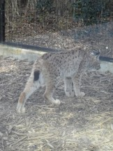 Zoo de Vincennes (321)