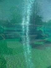 Zoo de Vincennes (33)