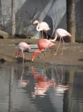 Zoo de Vincennes (338)