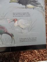 Zoo de Vincennes (347)