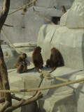 Zoo de Vincennes (361)