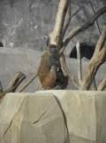 Zoo de Vincennes (368)