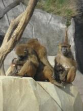 Zoo de Vincennes (372)