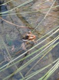 Zoo de Vincennes (381)