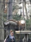 Zoo de Vincennes (389)