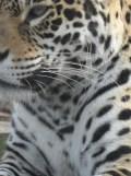 Zoo de Vincennes (407)