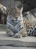 Zoo de Vincennes (408)