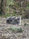 Zoo de Vincennes (413)