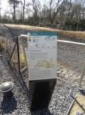 Zoo de Vincennes (45)