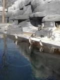 Zoo de Vincennes (65)