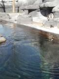 Zoo de Vincennes (68)