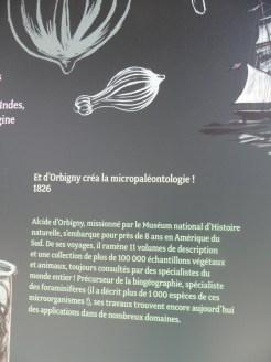 Zoo de Vincennes (92)